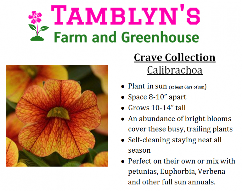 Tamblyns Farm And Greenhouse Annuals