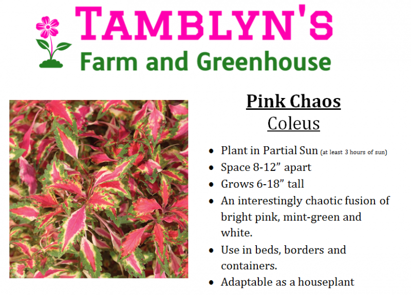 Tamblyns Farm and Greenhouse - Annuals